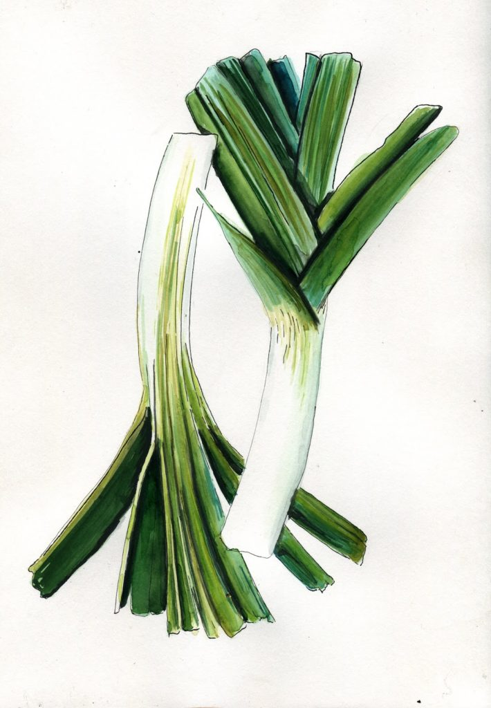 zupa-z-porów-kalafiora-ilustracja-akwarela